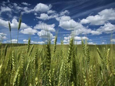 Wheat Fields in the Palouse's Rich Agricultural Soil by Jim Richardson