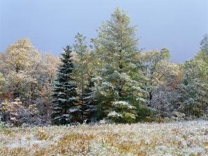 Early Snow Along Rte 73, Adirondack Mountains, NY by Jim Schwabel