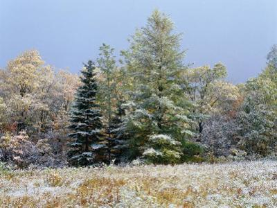 Early Snow Along Rte 73, Adirondack Mountains, NY