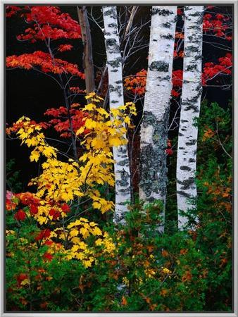 Fall Color, Old Forge Area, Adirondack Mountains, NY