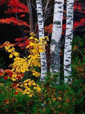 Fall Color, Old Forge Area, Adirondack Mountains, NY by Jim Schwabel