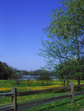 Trees in Spring, Orchard Park, Ny (1 of 4)