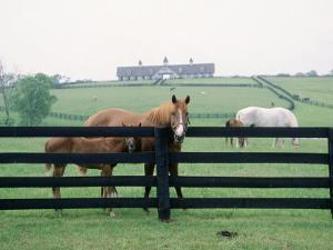 Woodford County Horse Farms, KY by Jim Schwabel
