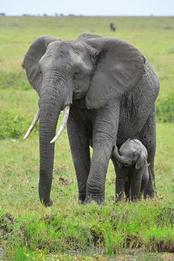 Masai Mara Elephant by Jim Varley Photography