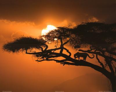 Jim Zuckerman African Sky 2 Art Print Poster