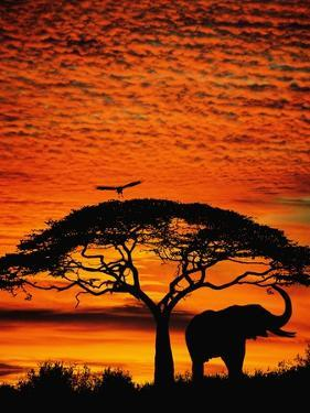 Elephant Under Broad Tree by Jim Zuckerman