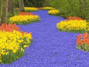 Flowers at Keukenhof Garden by Jim Zuckerman