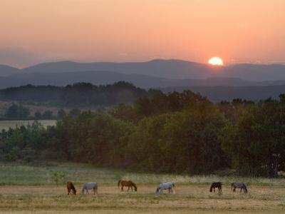 Horses Graze at Sunrise, Provence, France by Jim Zuckerman