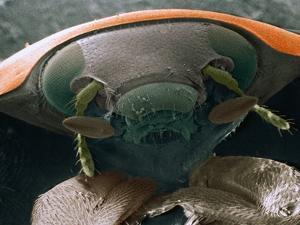 Microscopic View of Ladybug by Jim Zuckerman