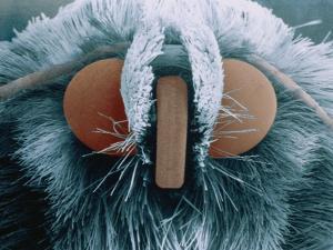 Microscopic View of Moth by Jim Zuckerman
