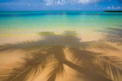 Palm Shadow Paradise by Jim Zuckerman