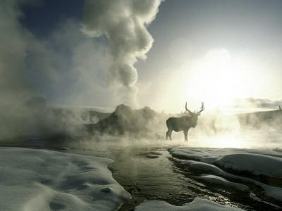 Sunrise Silhouette of Elk at Castle Geyser, Yellowstone National Park, Wyoming, USA by Jim Zuckerman