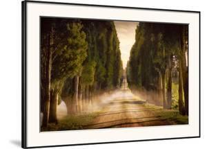 Cypress Lined Road II, Siena Tuscany by Jimmy Williams