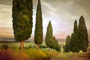 Cypress Road, Siena by Jimmy Williams