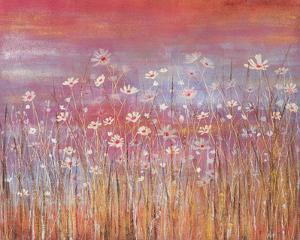 Wild Daisies at Sundown by Jo Starkey