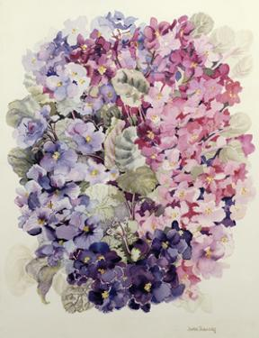 African Violets by Joan Thewsey