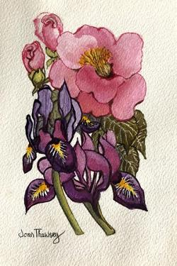 Camellia and Dutch Iris by Joan Thewsey