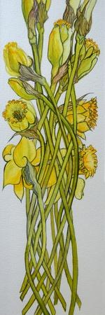 Daffodils,2008,