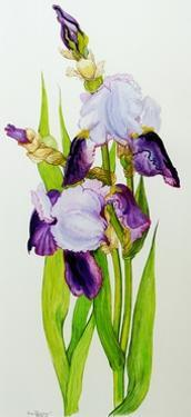 Mauve and purple irises with two buds by Joan Thewsey