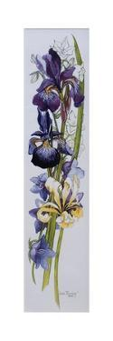 Purple and Yellow Irises with White and Mauve Campanulas,2013 by Joan Thewsey