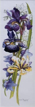 Purple and Yellow Irises with White and Mauve Campanulas,2013