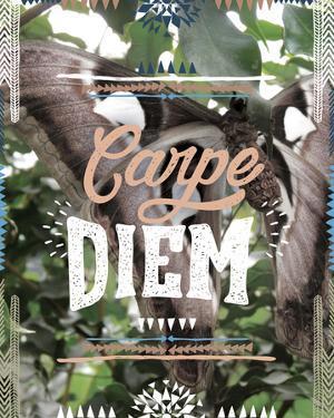 Carpe Diem by Joana Joubert