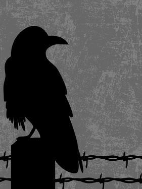 Raven by Joanne Paynter Design