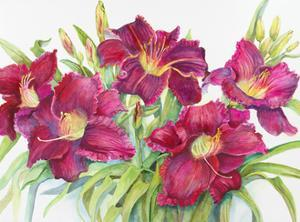 Red Daylilies with Yellow Centers by Joanne Porter