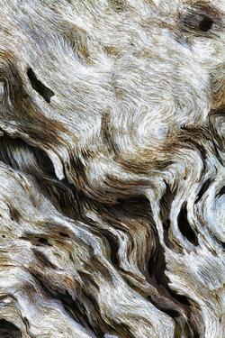 Abstract of Driftwood on the Beach, Jekyll Island, Georgia, USA by Joanne Wells