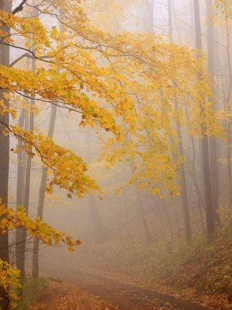 Fog and Autumn Foliage, Great Smoky Mountains National Park, North Carolina, USA