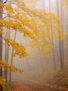 Fog and Autumn Foliage, Great Smoky Mountains National Park, North Carolina, USA by Joanne Wells