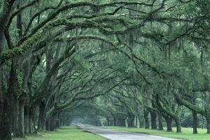 Historic Wormsloe Plantation, Savannah, Georgia, USA by Joanne Wells
