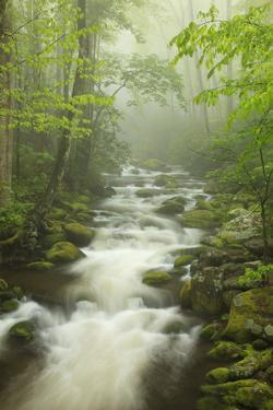 Stream at Roaring Fork Trail in the Smokies, Great Smoky Mountains National Park, Tennessee, USA by Joanne Wells