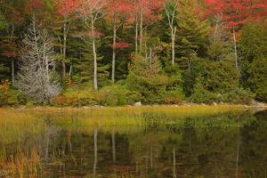 USA, Acadia National Park, Maine. Fall reflections at Bubble Pond. by Joanne Wells