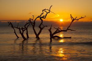 USA, Georgia. Jekyll Island, Driftwood Beach at sunrise. by Joanne Wells