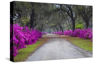 USA, Georgia, Savannah, Azaleas in Historic Bonaventure Cemetery by Joanne Wells