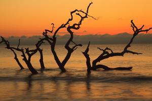 USA, Jekyll Island, Georgia. Driftwood Beach at sunrise. by Joanne Wells