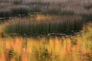 USA, Maine. Acadia National Park, reflections of fall color in a pond. by Joanne Wells