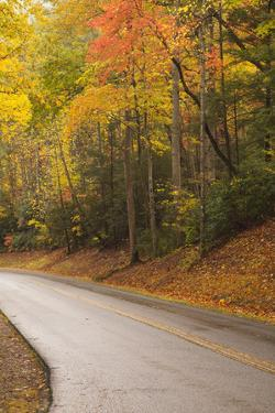 USA, Tennesse. Fall foliage along road to Cades Cove. by Joanne Wells