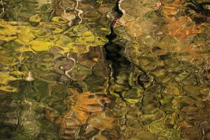 USA, Tennesse. Fall reflections in the Little River by Joanne Wells