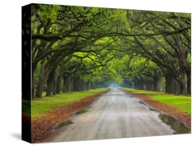 Wormsloe Plantation, Savannah, Georgia, USA by Joanne Wells