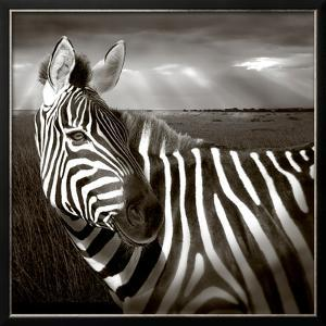 Black & White of Zebra and Plain, Kenya by Joanne Williams