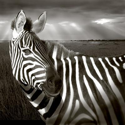 Black & White of Zebra and Plain, Kenya