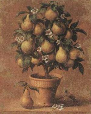 Pear Tree by Joaquin Moragues