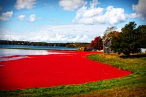 Cranberry Bog by Jobe Waters