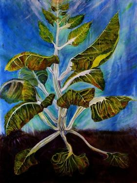 Bolted Chard by jocasta shakespeare