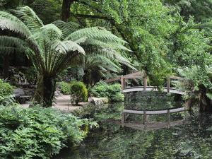 Alfred Nicholas Gardens, Dandenong Ranges National Park, Dandenong Ranges, Victoria, Australia by Jochen Schlenker