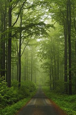 Beech Forest, Erzgebirge, Saxony, Germany, Europe by Jochen Schlenker
