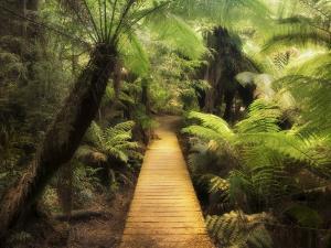 Boardwalk Through Rainforest, Maits Rest, Great Otway National Park, Victoria, Australia, Pacific by Jochen Schlenker