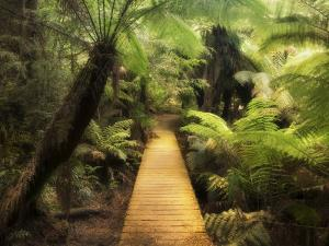 Boardwalk Through Rainforest, Maits Rest, Great Otway National Park, Victoria, Australia, Pacific by Jochen Schlenker